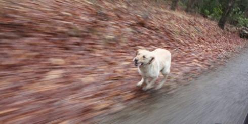 bailey running